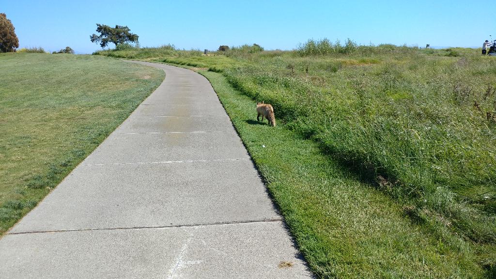 Monarch Bay Golf Club Tony Lema Course San Leandro Ca